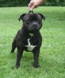 http://mooncraft.ee/images/thumbnails/images/stories/staffies/owned/catch-me1-149x180.jpg